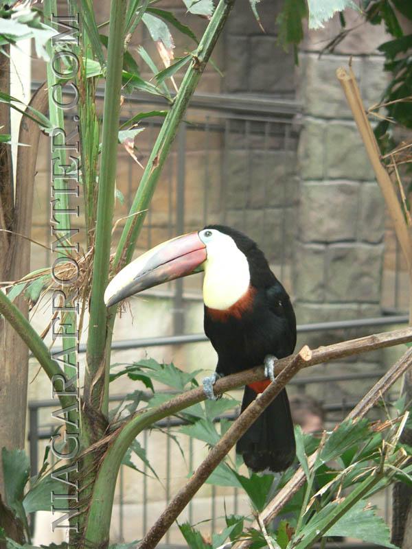 birdkingdom related keywords birdkingdom long tail
